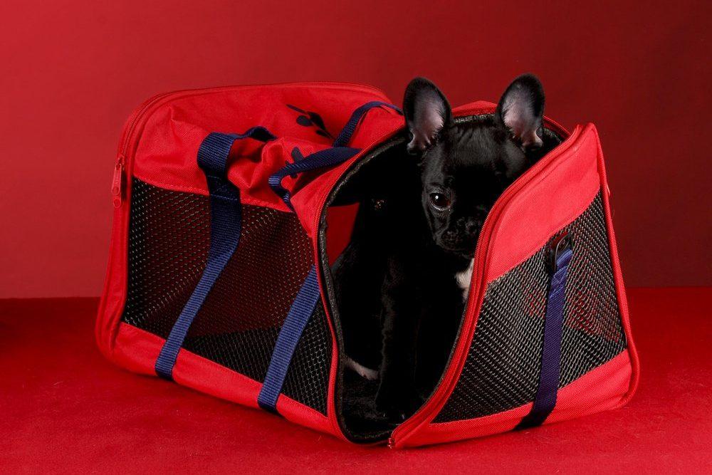 best soft dog crate